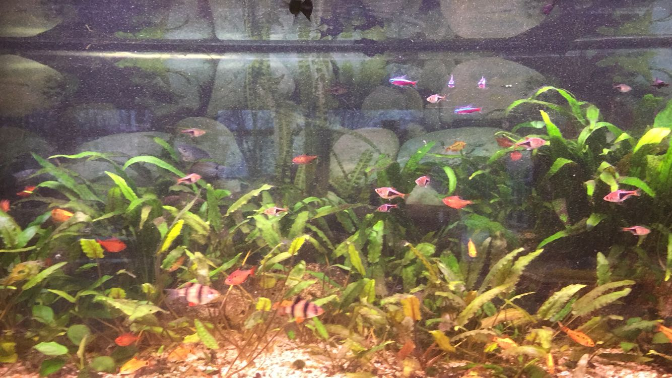Aquarium 01